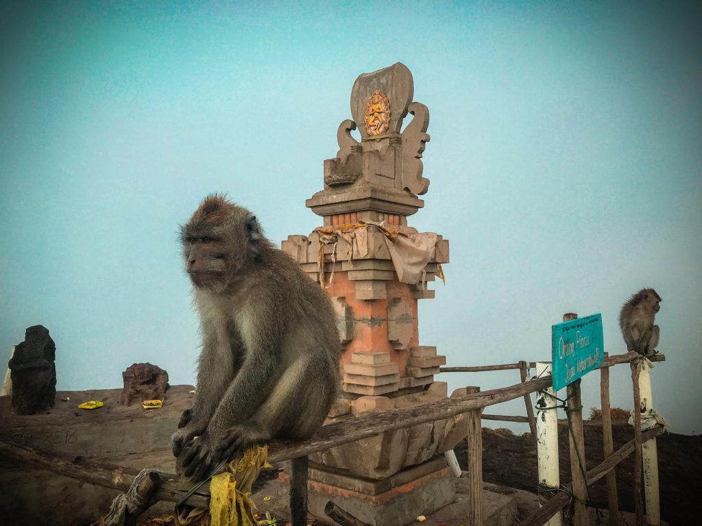 Mono en la cima del Batur