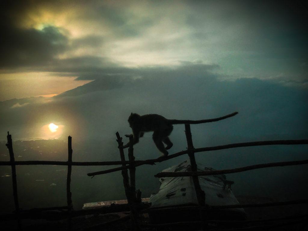 Monos montañas Bali