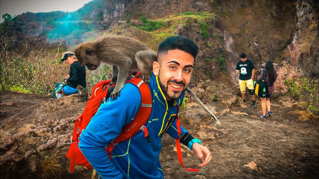 Monos curiosos Monte Batur