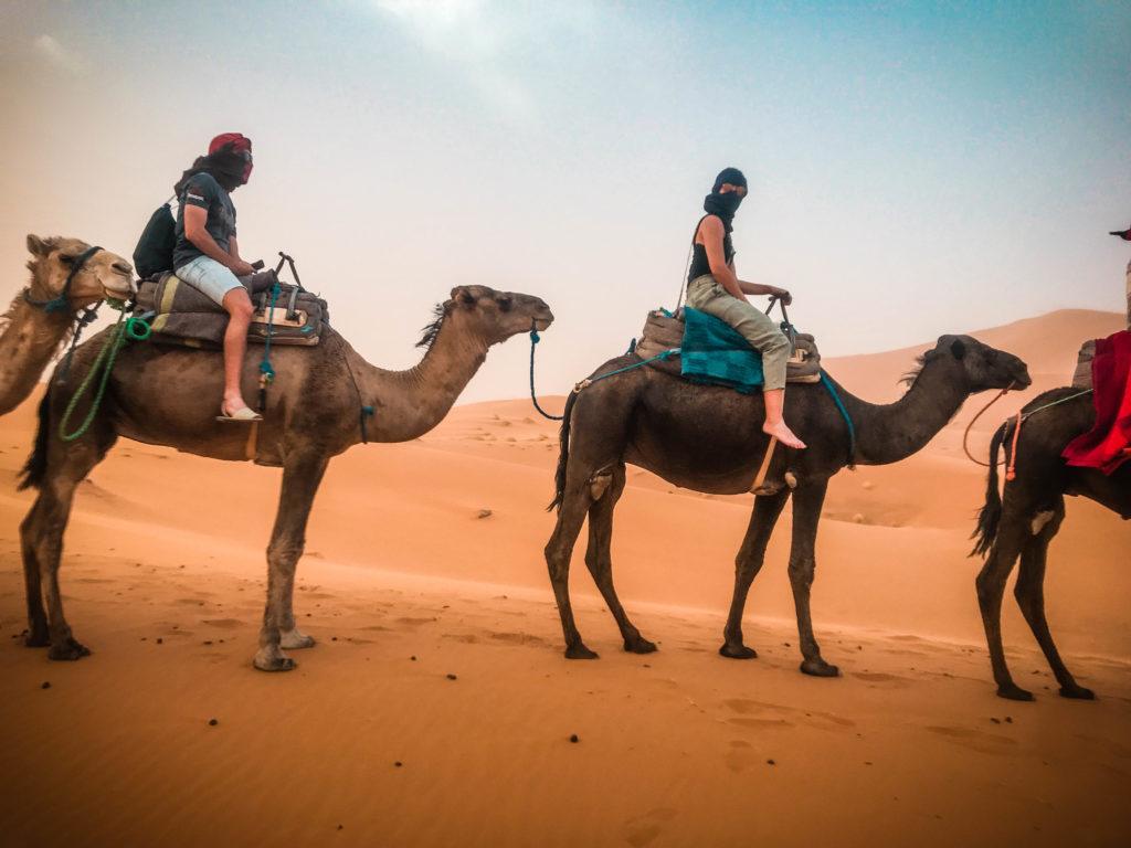 Camellos, Merzouga